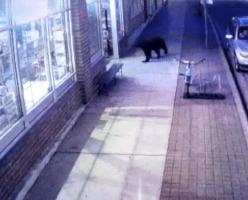 В Британской Колумбии медведь забежал в магазин спиртных напитков (ВИДЕО)