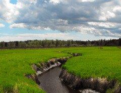 Новый огромнейший парк в 350 гектаров открывается на территории Большого Ванкувера