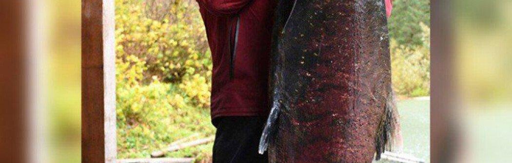 В Канаде поймали самого большого лосося в мире