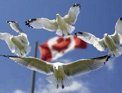Канада вошла в число самых безопасных стран мира в эпоху COVID-19