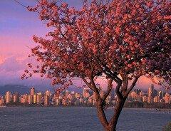 Чем насладиться весной в Ванкувере? (подборка невероятно красивых мест)