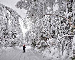 Мнение эксперта: зимняя погода в Канаде сделает коронавирус сильнее