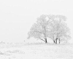 Резкое похолодание: предупреждение Министерства окружающей среды Канады