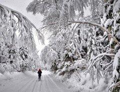 Какую зиму ожидать канадцам в 2020-2021?