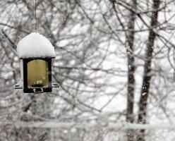Более теплая зима в Оттаве: прогноз от Министерства окружающей среды