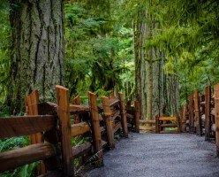 С середины мая в Британской Колумбии начнут работать парки, рестораны, магазины