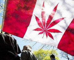 Употребление каннабиса в Канаде выросло на 40%