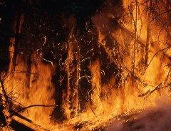Канада инвестирует 15 миллионов долларов в борьбу с пожарами на Амазонке