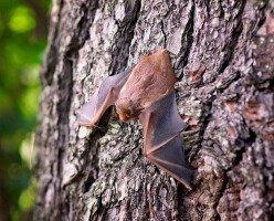 В Альберте обнаружено редкое заболевание, передающееся через летучих мышей и птиц