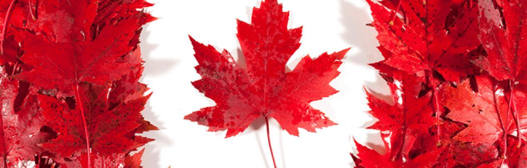 Переезд в Канаду: стоит ли ехать в 2021? Плюсы и минусы Канады