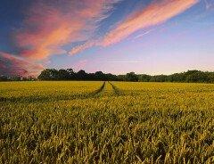 На канадском рынке продают огромный участок обрабатываемой земли за $56,5 млн
