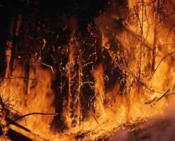 Сотни людей эвакуированы из-за лесного пожара в Британской Колумбии