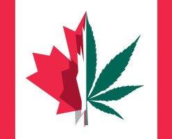 Возможна ли иммиграция в Канаду через учебу, работу или бизнес в каннабис индустрии?