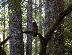 Канада и Британская Колумбия разработают новое Соглашения об охране природы