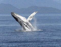 Сенат Канады запретил держать в зоопарках китообразных и импортировать акульи плавники