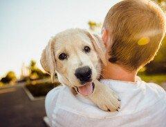 В Ванкувере хотят убрать пункт о запрете домашних животных из договоров аренды