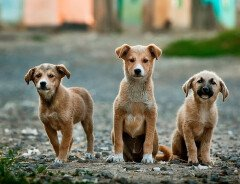 В Онтарио введут уголовные наказания за жестокое обращение с животными
