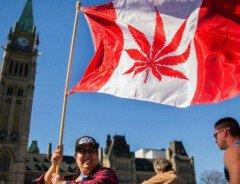 Канадских студентов научат выращивать марихуану