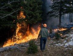 В связи с лесным пожаром объявлена эвакуация в регионе Оканаган