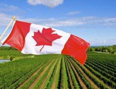 Канада запустит иммиграционный пилотный проект в области сельскохозяйственной продукции