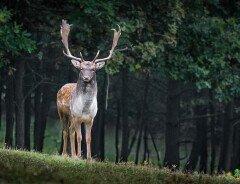 Канада заняла 4-е место в мире среди мест отдыха для любителей дикой природы