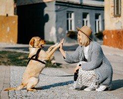 В Ванкувере одобрили отмену пункта о запрете домашних животных в договорах аренды
