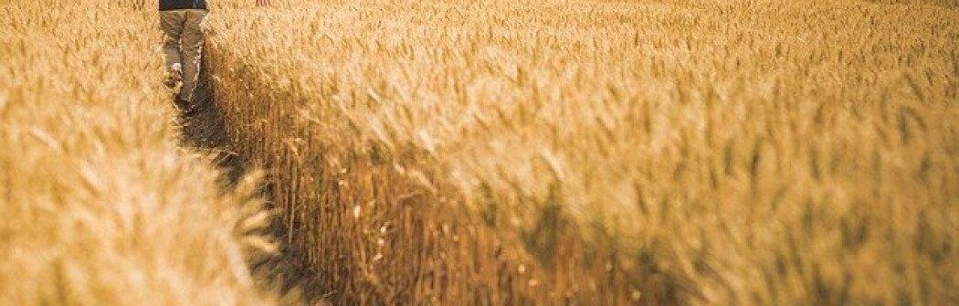 Зачем Канаде пилотная программа Agri-Food Immigration Program?