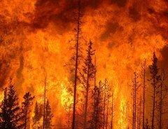 Большой Ванкувер находится под угрозой лесных пожаров