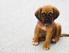 Канадский владелец 5 собак, напавших на более мелкую собаку, оштрафован на $750