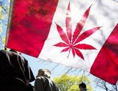 Легализация марихуаны в Канаде: основные моменты легализации и урегулирования