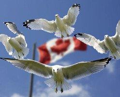 Канада вошла в ТОП-10 самых демократичных стран в мире