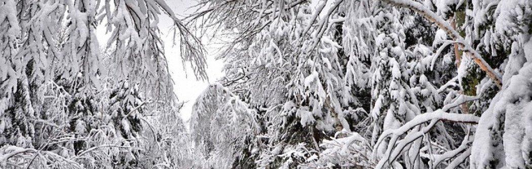 В Канаде ожидается более холодная и влажная зима в этом году