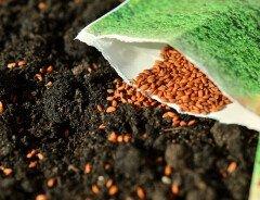 Правительство Канады предупреждает: не сажайте незнакомые семена, полученные по почте
