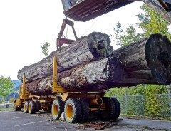 Протестная акция: Автоколонна, насчитывающая до 200 лесозаготовительных машин, въехала в центр Ванкувера