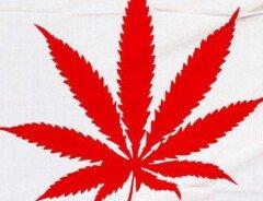 Как произошло мое знакомство с марихуаной в Ванкувере или так ли вредна марихуана?