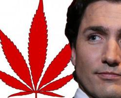 Джастин Трюдо легализует марихуану не для того, чтобы осчастливить курильщиков