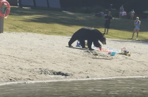 На озеро Сасамат запретили проносить еду из-за медведя (ВИДЕО)