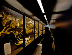 Beaty Biodiversity Museum – Музей биологических разнообразий