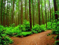 Региональный парк Пасифик спирит (Pacific Spirit Regional Park)
