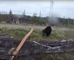 Медведь - барибал атаковал мужчину в лесу (ВИДЕО)