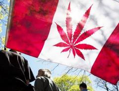 Жителям Канады разрешат выращивать четыре куста марихуаны дома после легализации