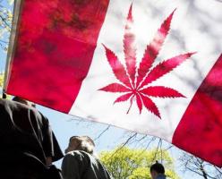 Правительство Британской Колумбии возьмет под контроль торговлю марихуаной