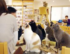 «Кошачье» кафе в Ванкувере пришлось временно закрыть из-за недостатка кошек