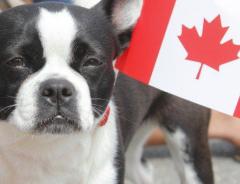Собак, которых хотели продать на мясо в Южной Корее, перевезли в канадские приюты