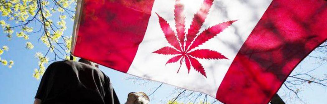 Сенат просит правительство отложить легализацию марихуаны