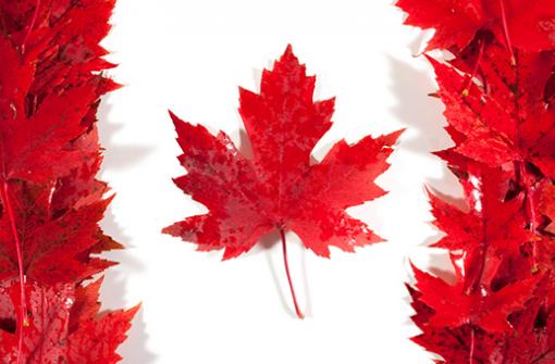 Рабочая виза в Канаду - как уехать в Канаду без проблем?