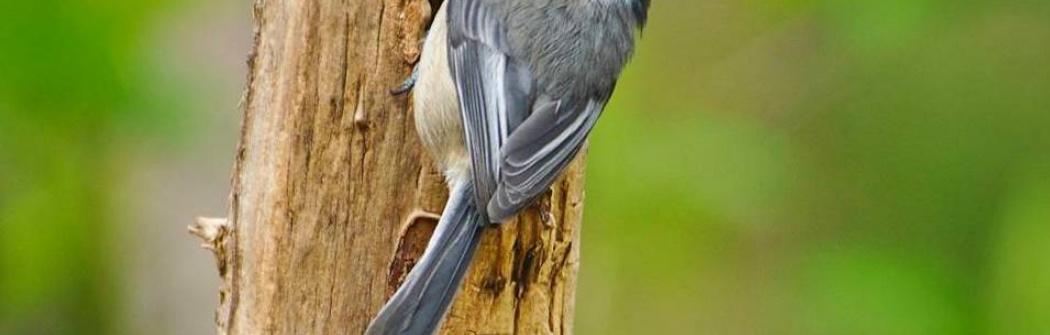 Парк птиц Мэйплвуд флэтс (Maplewood Flats)