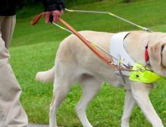 В Порт-Кокуитламе слепого мужчину и его собаку-поводыря выгнали из ресторана