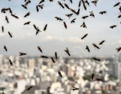 Летающие муравьи вернулись в Ванкувер