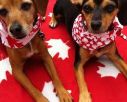 Сколько стоит содержание домашнего животного в Канаде?